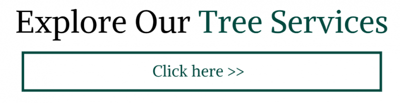 Click here to explore our tree services